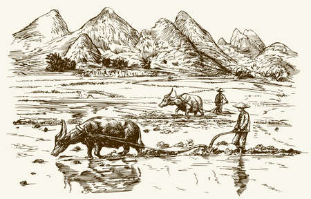 Asian farmers working on rice field. Hand drawn illustration.