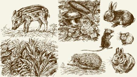 Waldecke. Wilde Tiere. Hand gezeichnet Set Illustration
