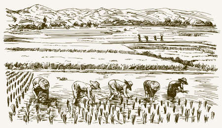 Asian farmers working on Field. Hand drawn illustration. Rice harvest. Imagens - 78064936