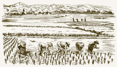 Asiatische Bauern arbeiten auf dem Feld. Hand gezeichnete Illustration. Reisernte.