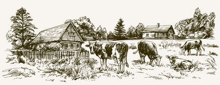 Cows grazing on meadow. Barn on the background. Hand drawn illustration. Illustration