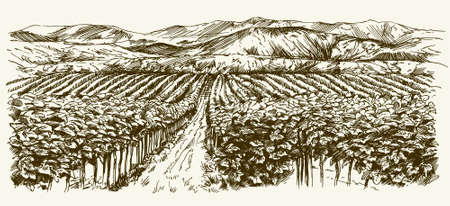 view: Wide view of vineyard. Vineyard landscape panorama. Hand drawn illustration.