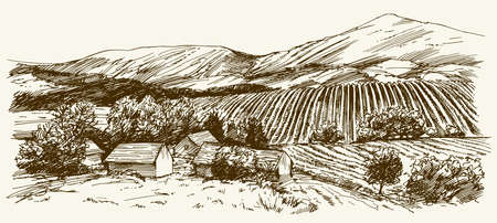 Wide view of vineyard. Vineyard landscape panorama. Hand drawn illustration.