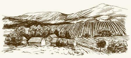 Wide view of vineyard. Vineyard landscape panorama. Hand drawn illustration.