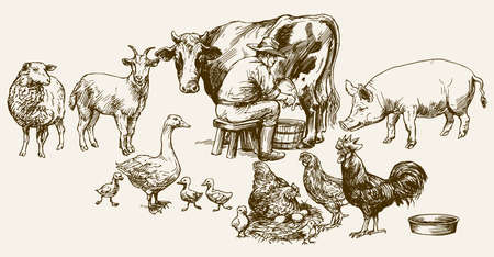 sheep barn: Farmer milking his cow. Farm animals. Illustration
