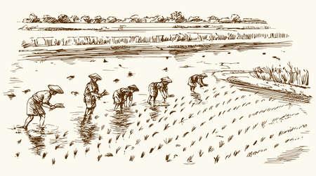 アジア農業分野に取り組んでいます。手描きのイラスト。米の収穫。 写真素材 - 77580392
