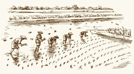 Asian farmers working on Field. Hand drawn illustration. Rice harvest.