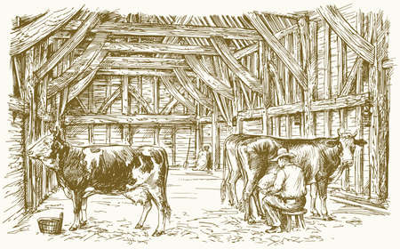 Cows inside a barn. Milking the cows. Vector illustration. Illustration