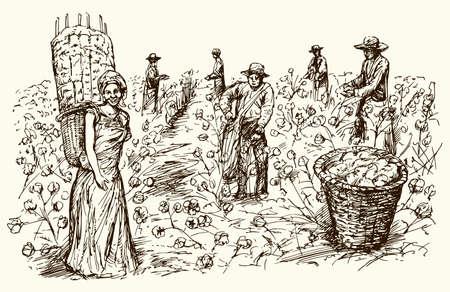 Arbeiter pflücken Baumwolle. Hand gezeichnet Illustration.