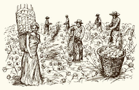 Workers picking cotton. Hand drawn illustration. Ilustracja
