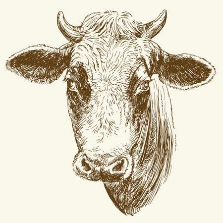 Koe. Hand getrokken vectorillustratie. Stock Illustratie