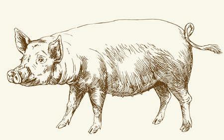 industry: Pig. Hand drawn illustration.