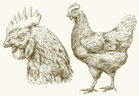 Huhn, Hand gezeichnet Illustration.