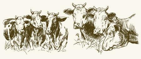 Kühe grasen auf der Wiese. Hand gezeichnete Illustration.