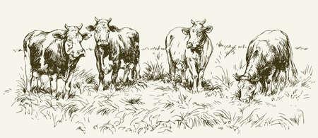 Vaches pâturage sur prairie. Hand drawn illustration. Vecteurs
