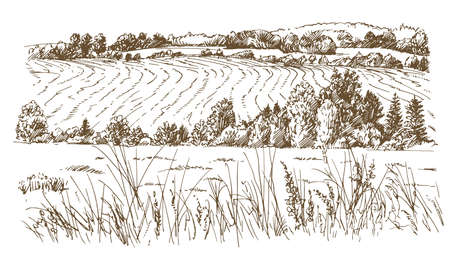 Agricultural landscape  in hand drawn, sketched illustration. Ilustracja