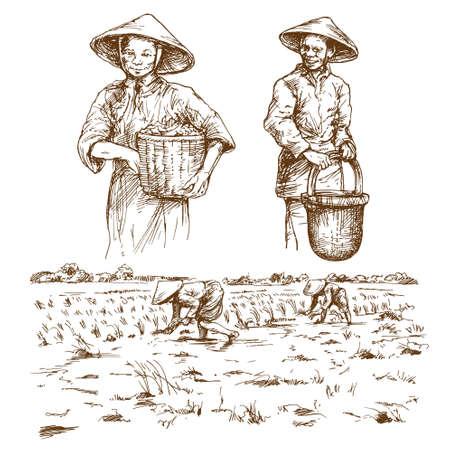 フィールドに取り組んでいるアジアの農家。●手描きのイラスト。米の収穫。
