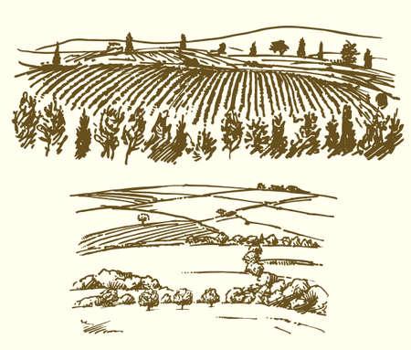 ブドウ園、農業風景イラスト。