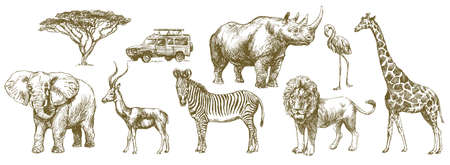 African safari animal. Hand drawn set.