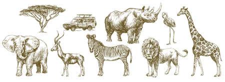 Animal de safari africano. Conjunto dibujado a mano.
