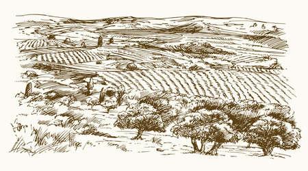 Paisaje italiano con viñedos y olivos. Ilustración de vector dibujado a mano. Ilustración de vector