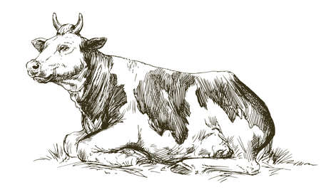 Lying cow. Hand drawn vector illustration. Иллюстрация