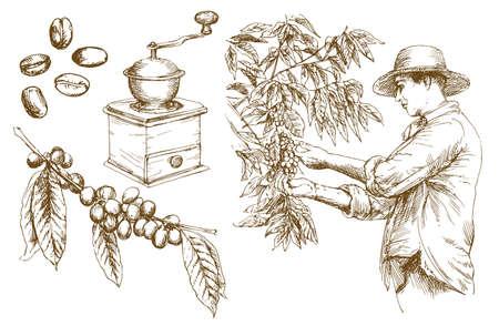 Contadino che raccoglie i chicchi di caffè. Illustrazione vettoriale disegnato a mano.
