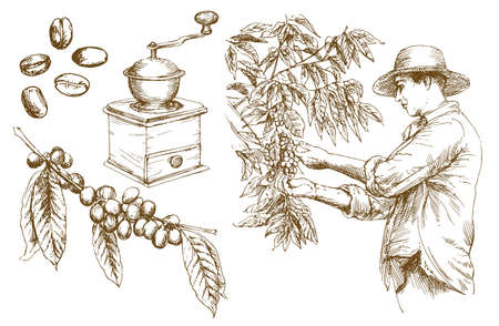 Farmer picking coffee beans. Hand drawn vector illustration.