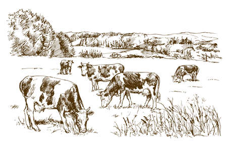 Cows grazing on meadow. Hand drawn illustration. Imagens - 110701729