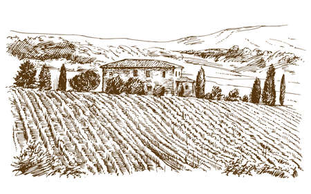 Vineyard landscape panorama. Vectores
