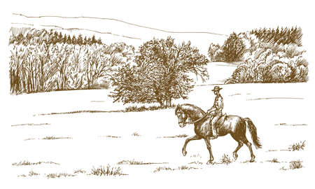 Horse rider in a green field. Illustration