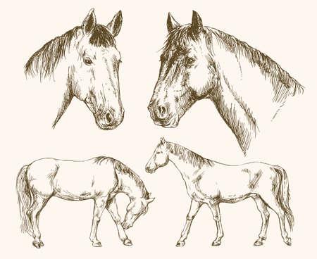 Pferde. Handgezeichneter Satz.