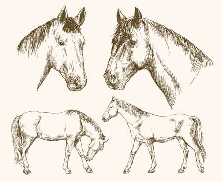 Horses. Hand drawn set. Illustration