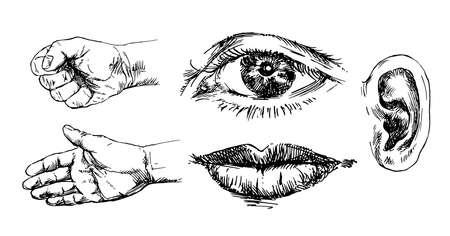 Human senses. Hand drawn set. Ilustrace