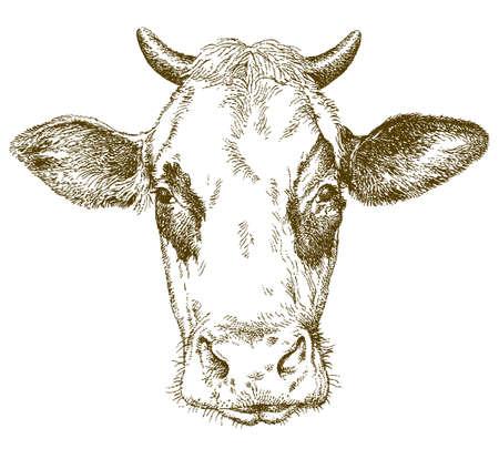 Cow. Hand drawn vector illustration.  イラスト・ベクター素材