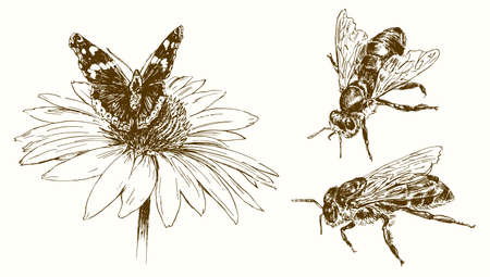 Butterfly and bees, hand drawn illustration.
