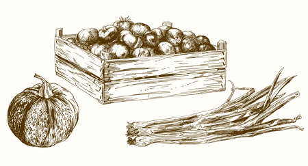 Vegetables, set of hand drawn vector llustration.  イラスト・ベクター素材