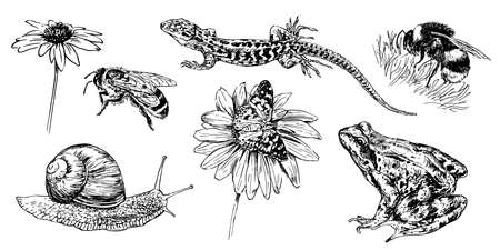 Collection of hand drawn animals and insect.