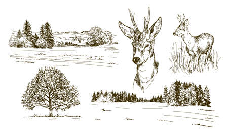 Rural landskape, forest and meadow with deer. Hand drawn set.  イラスト・ベクター素材