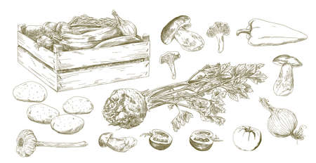 Set of vegetables, hand drawn set