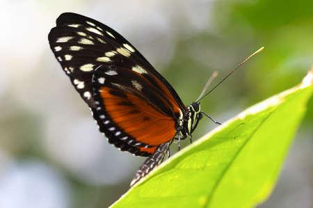 botanic: monarch butterfly, botanic garden
