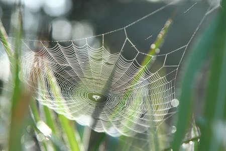 peat: cobweb in grass