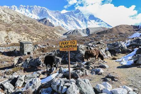 lable: island peak lable in himalaya trek Stock Photo
