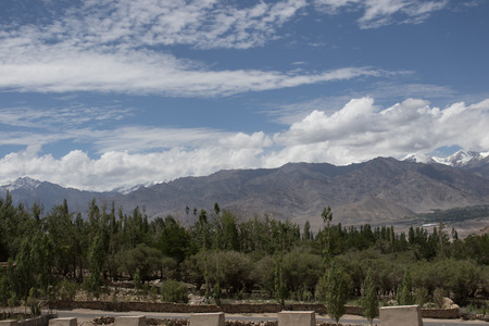malaya: tree and moutain malaya background from leh india