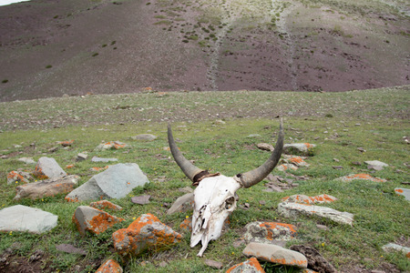 skull from way stok kangri summit from lehcity india trek
