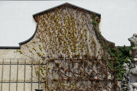vine on wall from europe