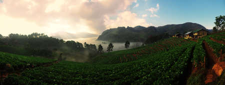 Strawberry Farm Panorama at Doi Ang Khang, Chiang Mai, Thailand photo