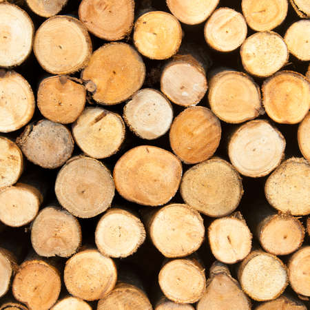 primary product: Pile of wood logs