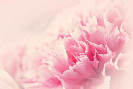 Pink flower for romantic background in soft background concept photo