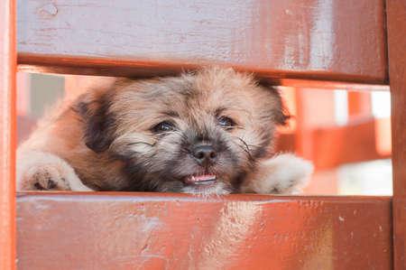 Lonely dog, emotional face. photo